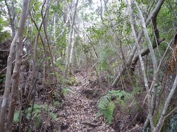 P1150178山頂下の山道(逆方向).JPG