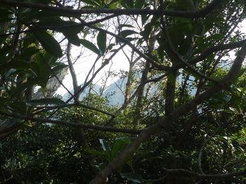 P1370816樹間わずかに山島山.JPG