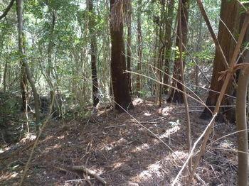 P1370888植林の段状地.JPG