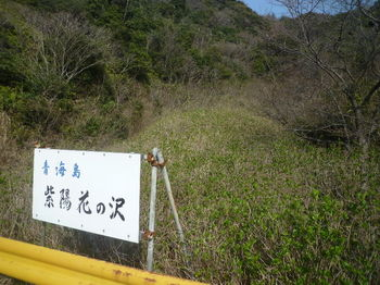 P1370932紫陽花の沢.JPG